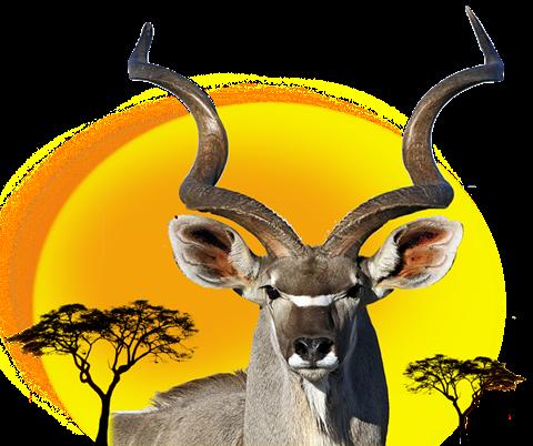 Hoeksfontein Safaris png logo