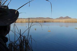 Bird Hunting Hoeksfontein Safaris